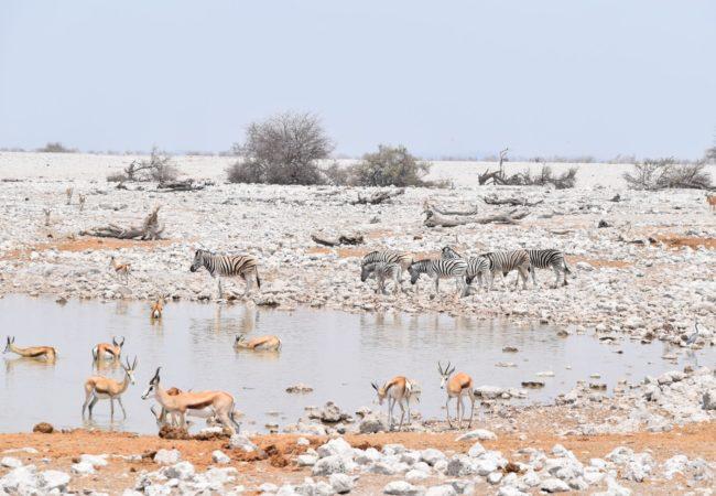 Parki Narodowe Afryki Biuro podróży Goforworld by Kuźniar