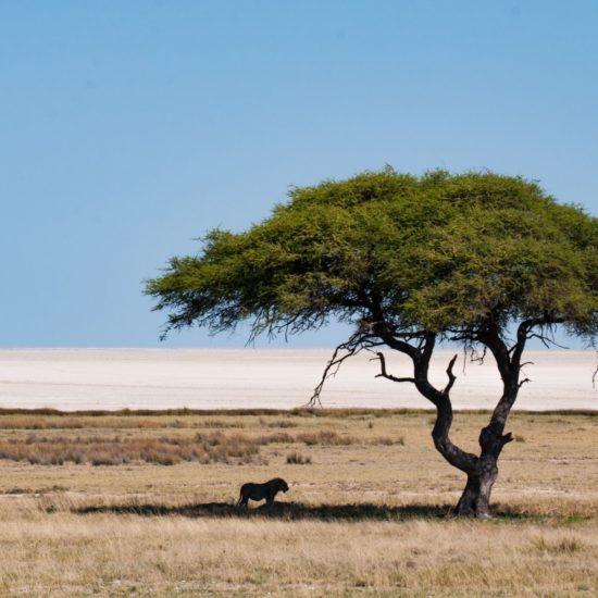Namibia 🇳🇦 Biuro podróży Goforworld by Kuźniar