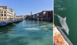 Najczystsza woda w Wenecji Biuro podróży Goforworld by Kuźniar