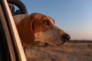Psy bronią dzikiej przyrody! Biuro podróży Goforworld by Kuźniar