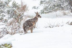 U nas prawie lato, w Australii już zima! Biuro podróży Goforworld by Kuźniar