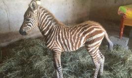 Wszystko dla małej zebry Biuro podróży Goforworld by Kuźniar